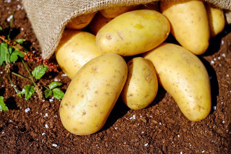 Dobré zemiaky. Foto - Pexels